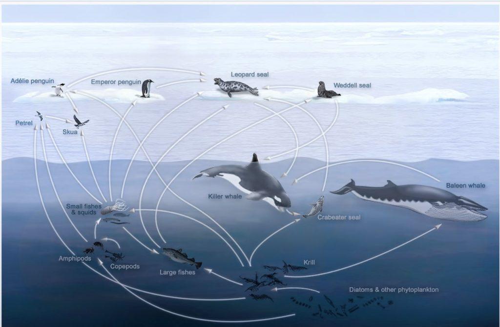 Ekosystém Antarktídy