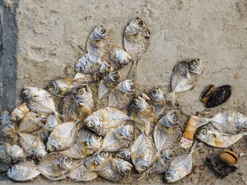 Ryby otrávené toxínmi z cigaretového filtra