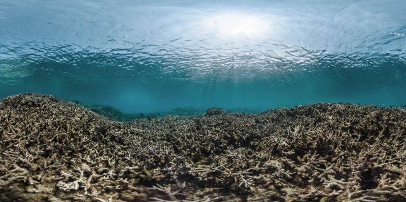 Mŕtvy korálový útes. Živé korálové útesy tvoria hlavný zdroj obživy pre miliardu ľudí.