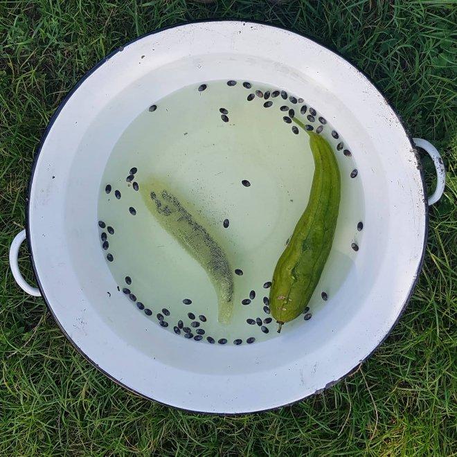 Oddelenie dužiny od šupky a semienok